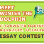 Meet Winter the Dolphin Essay Contest